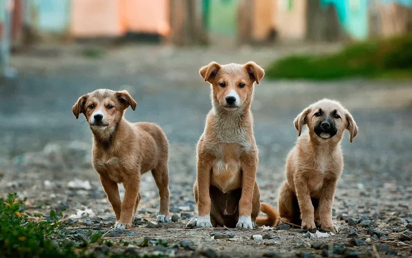 Caridad-perros